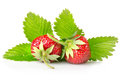 Ripe strawberries with leaves Stock Photo