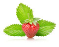 Ripe strawberries with leaves  Stock Photos