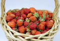 Ripe strawberry in a basket Royalty Free Stock Images