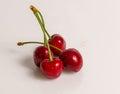 Ripe sweet cherry Royalty Free Stock Photo