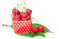 Ripe sweet and juicy cherry tasty berry wet fruits with water drops in small square bowl on fresh green leaves isolated Stock Images
