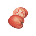 Ripe tomato whole and half cut. Juicy red tomato watercolor painting on white background. Royalty Free Stock Photo