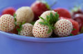 Ripe varietal white strawberry with red seeds lies in the purple Cup Royalty Free Stock Photo