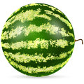 Ripe watermelon on white background illustration Stock Photo