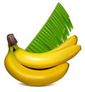Ripe yellow bananas with leaves. Royalty Free Stock Photography
