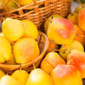 Ripe yellow pears in autumn outdoors healthy eating concept Royalty Free Stock Image
