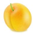 Ripe yellow plum with stem. Full depth of field Royalty Free Stock Photo