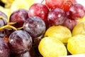 Ripen grapes Stock Photos