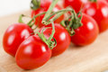 Ripened tomatoes on the vine close up Royalty Free Stock Photo