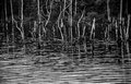 Ripples on reservoir a black and white film photograph of pond and dead trees the manasquan in central new jersey Royalty Free Stock Images
