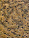 Ripples in seabed ocean floor photo of left the sand at low tide showing sealife and shells ideal for backgrounds etc Stock Photography