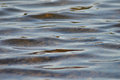 Ripples in water abstract of on at a local lake Royalty Free Stock Photo