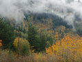 Rising mist from a mountain with autumn leaves Royalty Free Stock Images