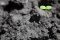 Rising plant green on the black and white ground Stock Photography