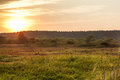 Rising sun with forest on horizon at rural field during summer morning at dawn Royalty Free Stock Photo