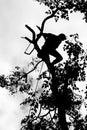 Risk of lumberjack Royalty Free Stock Photo