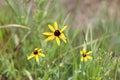 Ritter Springs Field Flower