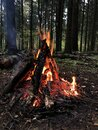 Ritual bonfire in the forest. Evening beautiful bonfire of burning pine in the wild forest. Firewood burns orange flame. Red flame Royalty Free Stock Photo