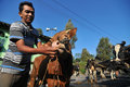 Ritual to cleanse the village residents bring his cows in annual in boyolali central java indonesia is an area of Stock Image