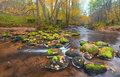 River in autumn forest Royalty Free Stock Images