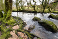 River bank the banks of the fowey as it flows through golitha falls on the southern edge of bodmin moor in cornwall Stock Photo