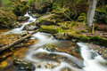 River in the Bavarian Forest