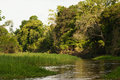 A river and beautiful trees in a rainforest peru amazon Stock Images