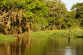 A river and beautiful trees in a rainforest peru amazon Stock Image
