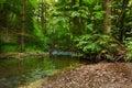 River bela in the valley pilske udoli calm stream moravian landscape Royalty Free Stock Images