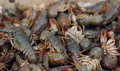 River crabs live background soft focus Royalty Free Stock Image