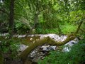 River deep in mountain forest nature composition Royalty Free Stock Photos
