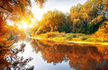 River in a delightful autumn forest at sunny day Stock Photos