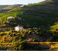 River douro valley portugal vineyard hills in the Royalty Free Stock Photo