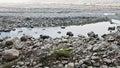 River in dry season Royalty Free Stock Photo