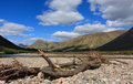 River etive dead trees on the riverbank of close to locht scotland Stock Photo