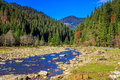 River flows by rocky shore near the autumn mountain forest landscape of that pine at foot of Royalty Free Stock Images