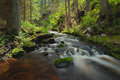 River in the forest Stock Photography