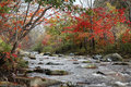 River in forest autumn Stock Photography