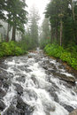River in a forest running on mt rainier seattle washington usa Stock Photos