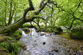 The river fowey fast flowing over mossy rocks and boulders through ancient woodland in cornwall south of bodmin moor Royalty Free Stock Photography