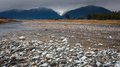 River from Fox glacier with rock foreground Stock Photos