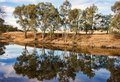 River gum trees reflecting in river Royalty Free Stock Photography