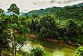 River in jungle. Royalty Free Stock Photo