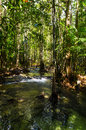 River in the jungle of tropical trees in the park of southern thailand asia Royalty Free Stock Photos