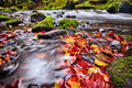 River kamenice in autumn bohemian switzerland with long exposure czech republic Stock Images