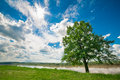 River landscape with tree cloudy sky and sunshine Royalty Free Stock Image