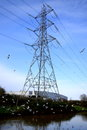 River lea transmission tower near in london england with flock of seagulls Royalty Free Stock Photo