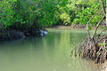 River in Mangrove Forest Royalty Free Stock Photo