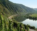 River moselle high angle view including vine plants at in germany Royalty Free Stock Images