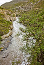River polluted section of with molle tree in the foreground Royalty Free Stock Photos